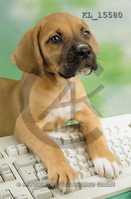 Interlitho, Alberto, ANIMALS, dogs, photos, young bulldog, keyboad(KL15580,#A#) Hunde, perros