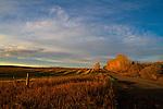 Wheatfield at Dawn