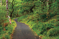 Walking and Cycling path through oak woodland, near the Falls of Leny and Kilmahog, Loch Lomond and the Trossachs National Park