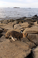 A cat walks across rocks on the shoreline of Jakarta Bay.<br />