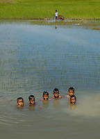 Children playing in flooded Rice fields, Cambodia