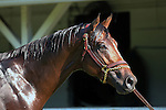 May 08, 2015  Firing Line returned to galloping at Churchill Downs following his second place finish in the 2015 Kentucky Derby.  He was ridden by his exercise rider Humerto Gomez.  He is pointed toward the Preakness Stakes at Pimlico on May 16. Owner Arnold Zetcher, trainer Simon Callaghan. By Line of David x Sister Girl Blues  (Hold For Gold.) ©Mary M. Meek/ESW/CSM