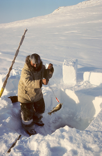 Aipilik, an Inuit hunter, jigging for polar cod though a hole in the ice. Igloolik, Nunavut, Canada