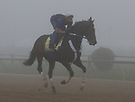 Rachel Alexandra working out early Friday morning at Pimlico