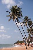Maceio, Alagoas, State, Brazil. Ponta Verde beach; palm trees.