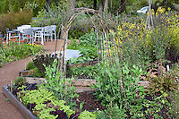 Organic vegetable and herb garden with rustic pea trellis in raised beds to conserve space.