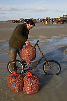 Europe/France/Picardie/80/Somme/Baie de Somme/Le Hourdel: ramassge des coques de La Baie de Somme, à la Pointe du Hourdel -vélo des ramasseurs pour porter les sacs de coques -Auto N°:2008-205  N°:2008-206