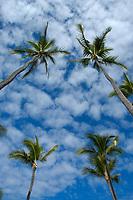 coconut palm trees and clouds, Kailua Kona, Big Island, Hawaii, Pacific Ocean