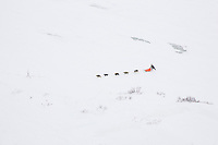 Aerial of Hugh Neff as he runs on the slough before Shaktoolik on Monday afternoon during Iditarod 2008