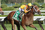 August 10, 2014: Cavorting with Irad Ortiz, Jr. win the 98th running of the Grade II Adirondack Stakes for 2-year old fillies, going 6 1/2 furlongs at Saratoga Racetrack. Trainer: Kiaran McLaughlin Owner: Stonestreet Stables. Sue Kawczynski/ESW/CSM