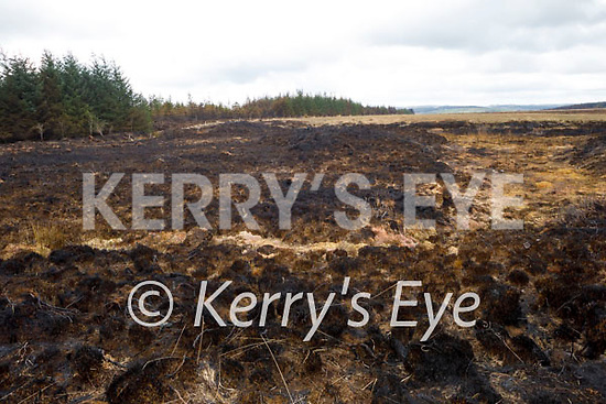 The site of a devastating gorse fire at the Black Banks in Toureenablaha Loughfouder