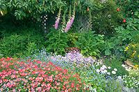Garden flowers. Greenwood Pier. Elk. California