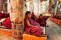 Tibetan monks in the Upper Wutan Monastery, Rebgong (Chinese name - Tongren),  on the Qinghai-Tibetan Plateau. China.