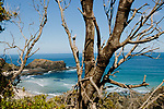 Image Ref: CA964<br /> Location: Bushrangers Bay Track<br /> Date of Shot: 28.09.19