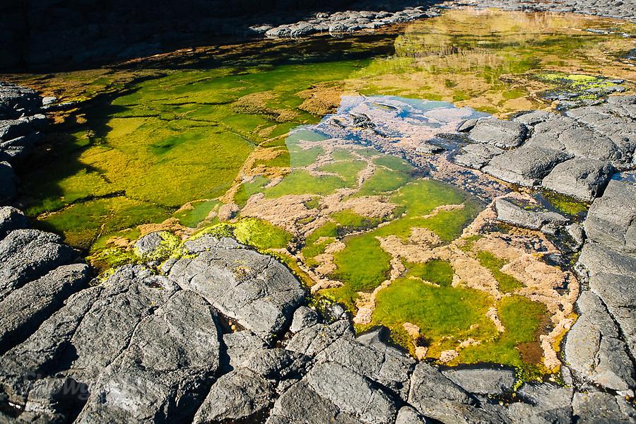 Image Ref: CA976<br /> Location: Bushrangers Bay Track<br /> Date of Shot: 28.09.19