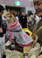 A miniature wears an Adidas hooded top at the Osaka Pet Expo fashion show, Japan.<br /> 25-Sept-11.<br /> <br /> Photo by Richard Jones