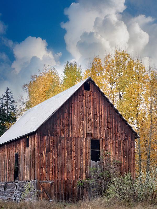Barn with fall color. Near Trout Lake, Washington