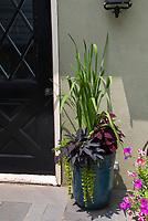 Foliage plants in big planter, Ipomoea Sweet potato vine, coleus Solenostemon, Phormium, Lysimachia nummularia aurea creeping jenny, in tall ceramic planter pot container, petunias, back door of house, foliage plants