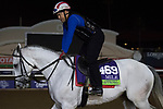 DEL MAR, CA - NOVEMBER 01: World Approval, owned by Live Oak Plantation and trained by Mark E. Casse, exercises in preparation for Breeders' Cup Mile during morning workouts at Del Mar Thoroughbred Club on November 1, 2017 in Del Mar, California. (Photo by Michael McInally/Eclipse Sportswire/Breeders Cup)