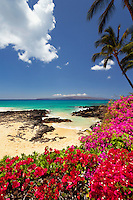 Bougainvillea and palm trees at Secret Beach, Maui.