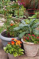 Container garden on patio, flowers and vegetables, Kale Lacinata, Striped Tomatoes with red cages, calibrachoa, cucumber, variety of pots