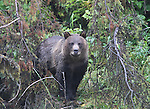Images from British Columbia's Great Bear Rainforest