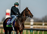 November 2, 2020: Casa Creed, trained by trainer William I. Mott, exercises in preparation for the Breeders' Cup Mile at Keeneland Racetrack in Lexington, Kentucky on November 2, 2020. Scott Serio/Eclipse Sportswire/Breeders Cup/CSM