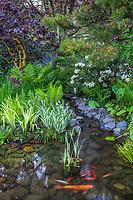 Garden pond with bog plants andfish; O'Byrne Garden