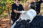harvest 2012 jpegs