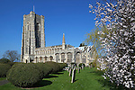 United Kingdom, England, Suffolk, Lavenham: Spring view with blossom of the Parish Church of Saint Peter and Saint Paul.