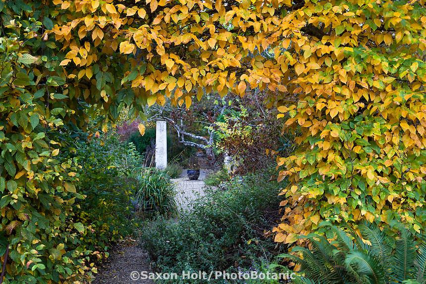 Entry portal cut through Hornbeam hedge (Carpinus betulus) in fall color into secret garden room with rammed earth column in Gary Ratway garden