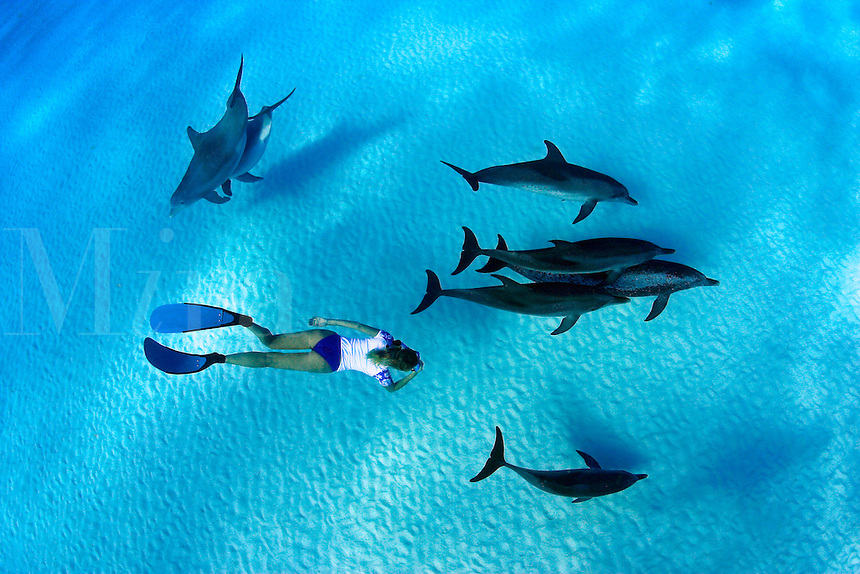 This freediver is swimming with Atlantic Bottlenose Dolphin, Tursiops truncatus, and Atlantic Spotted Dolphin,  Stenella plagiodon.  It is unusual for these species to intermix.  The Bahamas Bank.<br />