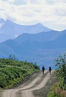 Backpackers hike along Denali Park Road. Denali National Park, Alaska