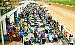 LAUREL, MARYLAND - OCTOBER 22: The crowd packs the seating area on Maryland Million Day at Laurel Park on October 22, 2016 in Laurel, Maryland. (Photo by Scott Serio/Eclipse Sportswire/Getty Images)