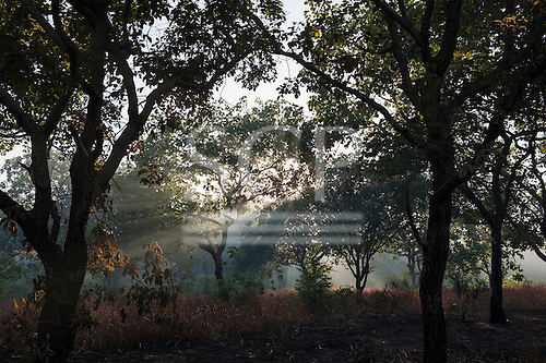 Xingu Indigenous Park, Mato Grosso, Brazil. Aldeia Matipu; smoke in the forest at dawn.