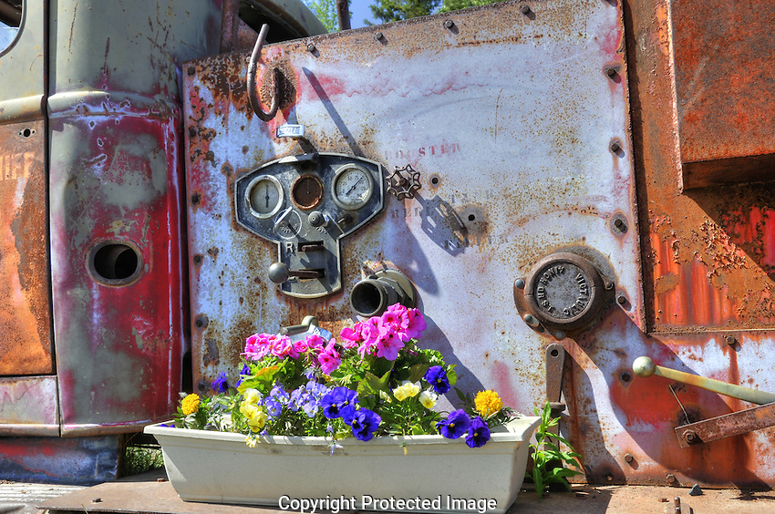 Floral beauty against the rust.