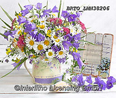 Alfredo, FLOWERS, BLUMEN, FLORES, photos+++++,BRTOLMN38206,#f#, EVERYDAY