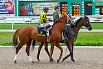 February 21, 2015:Red Rifle with Rafael Bejarano up in the Mineshaft Handicap at the New Orleans Fairgrounds Risen Star Stakes Day. Steve Dalmado/ESW/CSM