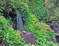 Impatiens with small waterfall. Near Hana, Maui, Hawaii.