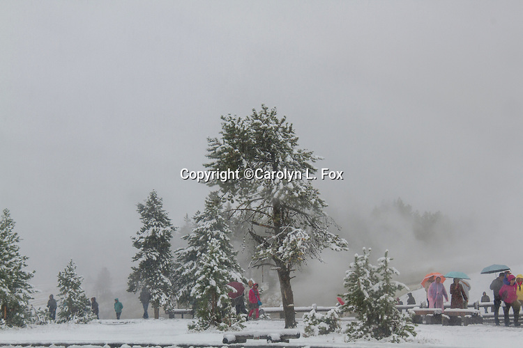 People are walking with umbrellas in the snow in Yellowstone National Park.