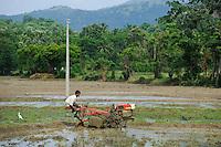 SRI LANKA, Trincomalee, farmer plows paddy field with motor plow / Bauer pfluegt ein Reisfeld mit Motorpflug