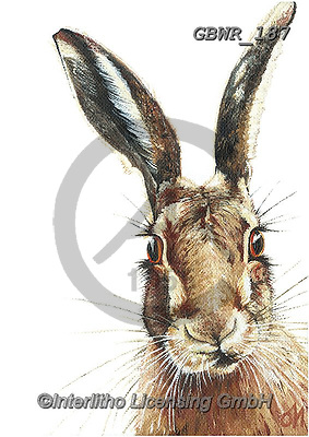 Simon, REALISTIC ANIMALS, REALISTISCHE TIERE, ANIMALES REALISTICOS, innovative, paintings+++++OliviaDeRivaz_Hare,GBWR187,#a#, EVERYDAY