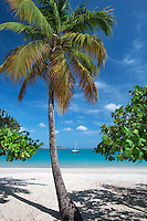 Beach at Megan's Bay with boat and palm tree. St. Thomas. US Virgin Islands.