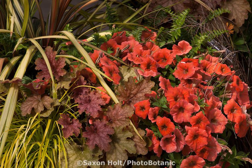 Container of colorful foliage and flowers, Heuchera 'Ginger Peach', Petunia 'Happy Peach', Carex 'Everillo'