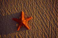 Starfish shell on sand in late afternoon light