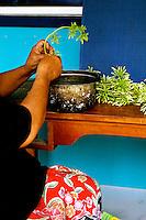 Making Papaya Flower Soup on Home Island, Cocos Keeling Islands, Indian Ocean