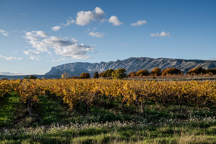 Vignoble Sainte-Victoire vers Puyloubier