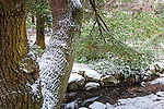 Bussey Brook at the Arnold Arboretum in the Jamaica Plain neighborhood, Boston, Massachusetts, USA