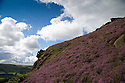 01/09/15<br /> <br /> Surrounded by stunning autumn heather, The Winking Man looks out over Ramshaw Rocks in The Staffordshire Peak District near Leek.<br /> <br /> As you travel along the road below The Winking Man another rock passes in front of the rock formation making its eye appear to wink.<br /> <br /> All Rights Reserved: F Stop Press Ltd. +44(0)1335 418629   www.fstoppress.com.
