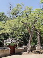 UIduhap im Secret Garden = Huwon= Biwon des Changdeokgung Palast, Seoul, Südkorea, Asien, UNESCO-Weltkulturerbe<br /> Uiduhap   in the secret garden of  palace Changdeokgung,  Seoul, South Korea, Asia UNESCO world-heritage